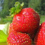 Tilladt at reklamere for jordbær og nye kartofler