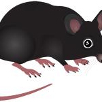 Milde vintre får antallet af rotter til at stige