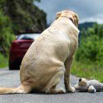 14,1 millioner kroner til bedre dyrevelfærd