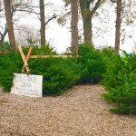 Juletræer til salg og hyggelig julebod i Vemmelev