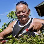 10.246 pensionister i regionen får mere i pension