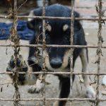 Politiet får nye dyreværnsenheder