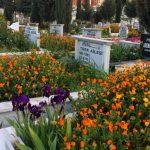 Strider mod islam at blive begravet i kommunen