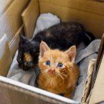 Stigning i dyreværnssager med katte