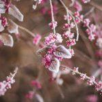 Gør din have klar til vinteren