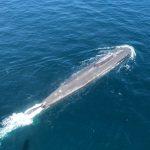Atomdrevet russisk ubåd sejlede gennem Storebælt