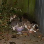 Hjemløse katte skal på den lokalpolitiske dagsorden
