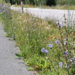 Vildere natur på vej i Slagelse Kommune